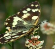 Fermez-vous vers le haut du papillon gentil Images stock