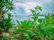 Fermez-vous vers le haut du petit arbre en parc de nation de Khao Laem Ya d'itinéraire aménagé pour amateurs de la nature images libres de droits