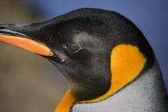 Fermez-vous vers le haut du pingouin de roi photos stock