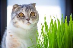 Fermez-vous vers le haut du portrait d'un chaton mignon se reposant sur une table dans le sco de jour images stock