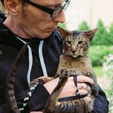 Fermez-vous vers le haut du portrait de chat extérieur Photographie stock libre de droits