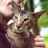 Fermez-vous vers le haut du portrait de chat extérieur Images stock