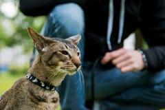 Fermez-vous vers le haut du portrait de chat extérieur Photo stock