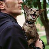 Fermez-vous vers le haut du portrait miaulant de chat extérieur Image libre de droits