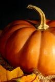 Fermez-vous vers le haut du potiron de thanksgiving Image libre de droits