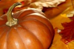 Fermez-vous vers le haut du potiron de thanksgiving sur des feuilles d'automne Photographie stock