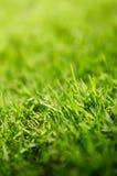 Fermez-vous vers le haut du projectile de l'herbe verte Image stock