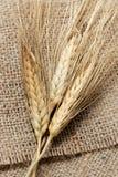 Fermez-vous vers le haut du projectile du blé Images stock