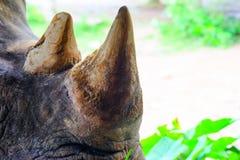 Fermez-vous vers le haut du rhinocéros dans le zoo Thaïlande photos stock