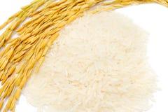 Fermez-vous vers le haut du riz de jasmin de paddy et du riz crus Images libres de droits