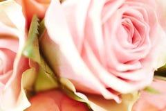 Fermez-vous vers le haut du rose s'est levé Photo stock