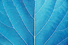 Fermez-vous vers le haut du style bleu de filtre de ton de détail de feuille Photos libres de droits