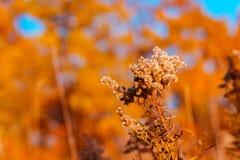 Fermez-vous vers le haut du tir d'un plan le long d'un sentier de randonnée près de Grand Rapids Michigan photographie stock libre de droits