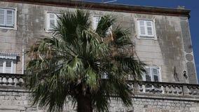 Fermez-vous vers le haut du tir d'une vieille façade du ` s de bâtiment avec un palmier au milieu banque de vidéos