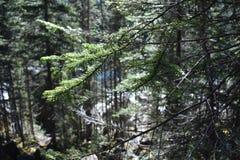 Fermez-vous vers le haut du tir des arbres avec une branche comme point focal Photographie stock