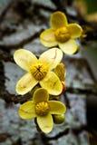 Fermez-vous vers le haut du tir des fleurs jaunes en Amazone Images stock