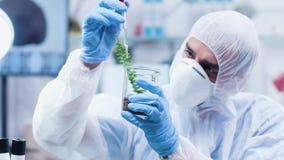 Fermez-vous vers le haut du tir statique du chercheur biologiste dans la combinaison versant le liquide vert sur des usines banque de vidéos