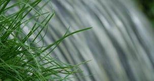 Fermez-vous vers le haut du tir du vert cru traversant de ressort de l'herbe clips vidéos