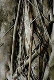 Fermez-vous vers le haut du tronc d'arbre de racine pour un fond Photos stock