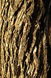 Fermez-vous vers le haut du tronc d'arbre de sel pour un fond Images stock