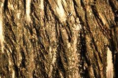 Fermez-vous vers le haut du tronc d'arbre de sel pour un fond Images libres de droits