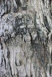 Fermez-vous vers le haut du tronc d'arbre de sel pour un fond Photographie stock