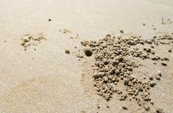 Fermez-vous vers le haut du trou de creusement de crabe sur la plage image libre de droits