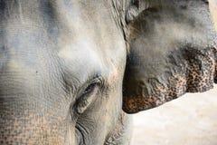 Fermez-vous vers le haut du visage d'éléphant Photos libres de droits