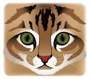 Fermez-vous vers le haut du visage de chat illustration libre de droits