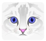 Fermez-vous vers le haut du visage de chat Photographie stock