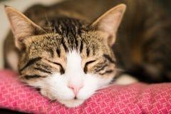 Fermez-vous vers le haut du visage de chat sur le lit rose Photos stock