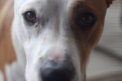 Fermez-vous vers le haut du visage de chien Image stock