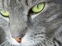 Fermez-vous vers le haut du visage du chat avec les yeux verts macro Images libres de droits