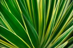 Fermez-vous vers le haut du yucca photographie stock
