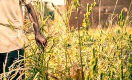 Fermier africain Photos libres de droits