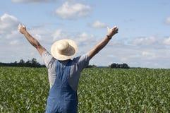 Fermier dans le champ de maïs Images stock