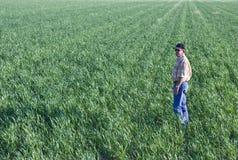 Fermier dans le domaine de blé Images libres de droits