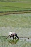 Fermier de l'Asie Image stock