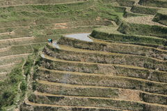 Fermier de terrasse de riz Photo libre de droits