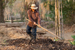 Fermier effectuant le compost Image stock