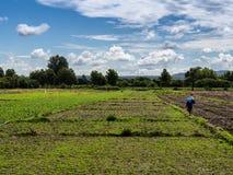 Fermier en Thaïlande Photo libre de droits