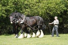 Fermier et chevaux de comté fonctionnant ensemble photographie stock