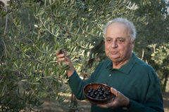 Fermier italien affichant des olives Photos stock