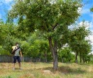 Fermier pulvérisant les arbres images stock