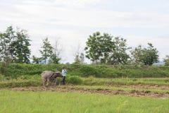 Fermier thaï Images libres de droits