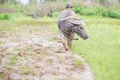 Fermier thaï Photographie stock libre de droits