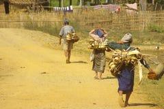 Fermiers asiatiques 2 Photo libre de droits