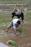 Fermiers chinois dans la plantation photographie stock libre de droits