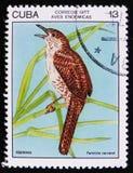Ferminia-cerverai Zaunkönig des Vogels Fermina oder Zapata, Stempel ist von der Reihe, circa 1977 Stockbilder