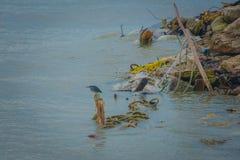 Fermo aspettante dell'uccello il pesce Fotografia Stock